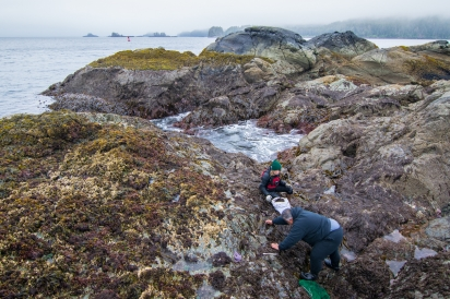 Harvesting Seaweed and Gumboots