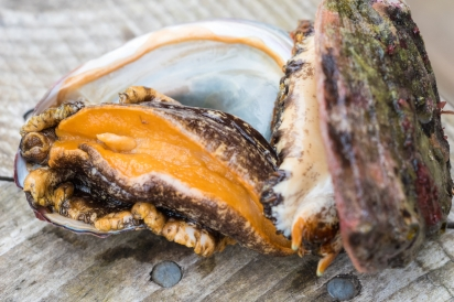 Wild abalone